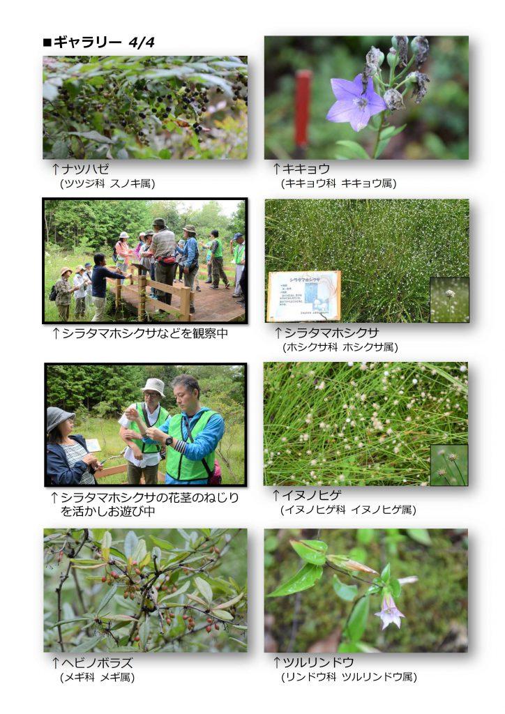 秋の上高湿地観察会